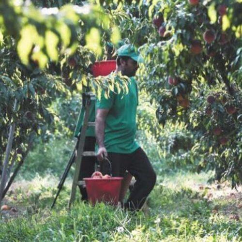 Ερώτηση από τη Βουλευτή  Φρ. Καρασαρλίδου σχετικά με τους εργάτες γης