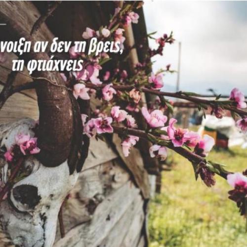 Βέροια - Ανθισμένες Ροδακινιές: Μήνυμα ελπίδας με φωτογραφία και ποίηση