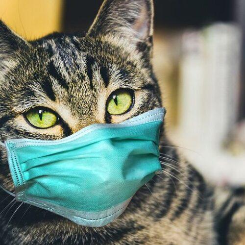 Ρωσία: Το πρώτο εμβόλιο κορωνοϊού για τα ζώα καταχώρισε η Μόσχα