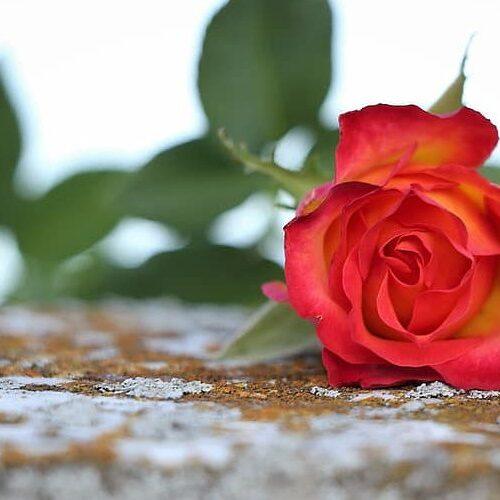 Την βαθιά της θλίψη για την απώλεια του Γιώργου Τουλουμτζή εκφράζει η Ν.Ε. ΣΥΡΙΖΑ Ημαθίας