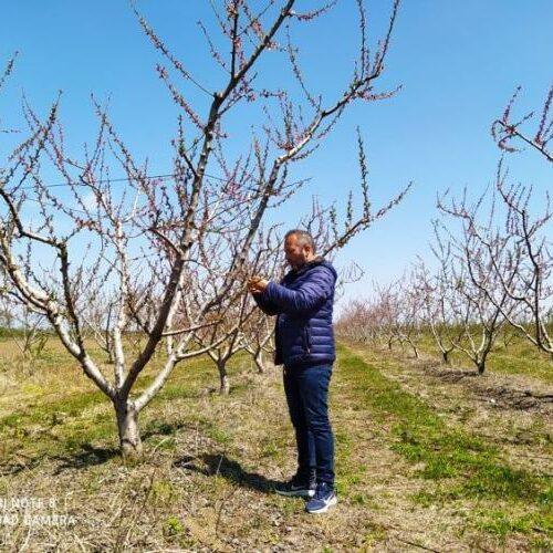 Ο Αγροτικός Συλλόγος Ημαθίας για τις ζημιές στις καλλιέργειες από τους παγετούς και De minimis ροδακινοπαραγωγών