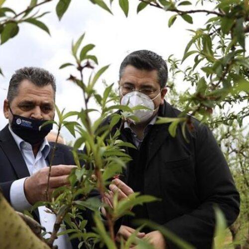 Δήλωση Κώστα Καλαϊτζίδη για τους πληγέντες αγρότες της Ημαθίας από τον παγετό