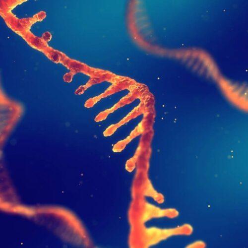 Θα μας αλλοιώσουν τα mRNA εμβόλια το DNA; – Λίγα επιστημονικά λόγια για τα εμβόλια κατά του Κοροναϊού. (Μέρος 1ο)
