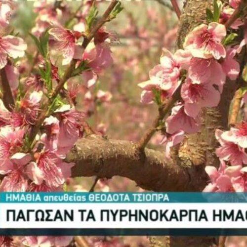 Δίκαιες και γρήγορες αποζημιώσεις στους πληγέντες από τους παγετούς παραγωγούς της Ημαθίας ζητάει ο Λάζαρος Τσαβδαρίδης