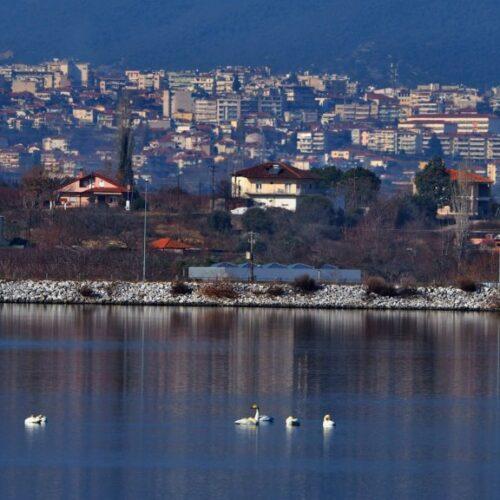 Η φύση είναι δίπλα μας / Πουλιά - επισκέπτες στη Λίμνη του Αλιάκμονα με το φακό του Νίκου Ματσάκα