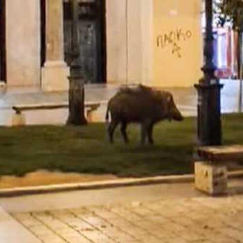Θεσσαλονίκη: Αγριογούρουνο βγήκε για βόλτα στην... Αριστοτέλους (video)