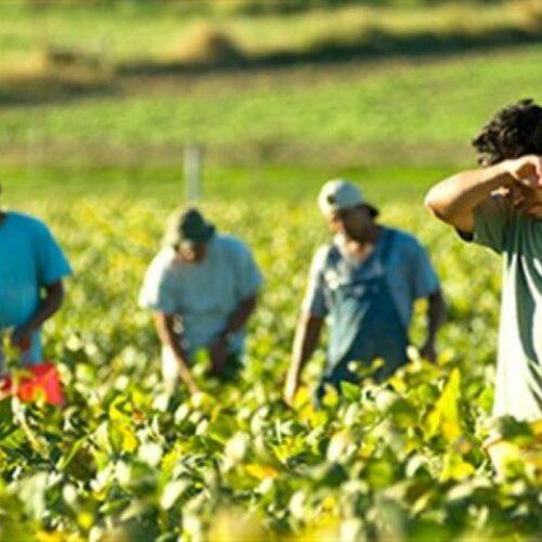 """Λάζαρος Τσαβαρίδης: """"Βελτιστοποίηση της διαδικασίας αντιστοίχισης των εργατών γης ανά στρεμματική έκταση"""""""