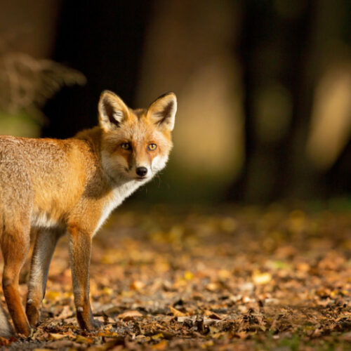 Η Π.Ε. Ημαθίας για την ανάγκη ενίσχυσης της παθητικής επιτήρησης της λύσσας των άγριων ζώων