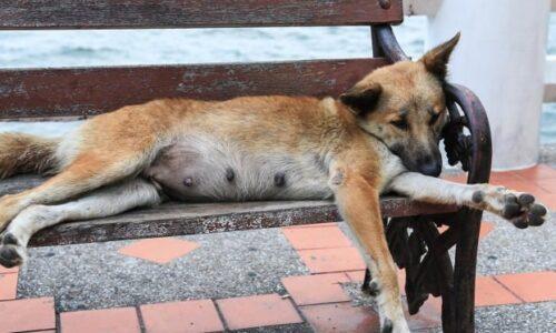 Ξεκινάει το πρόγραμμα εθελοντικών στειρώσεων αδέσποτων ζώων συντροφιάς στο Δήμο Βέροιας