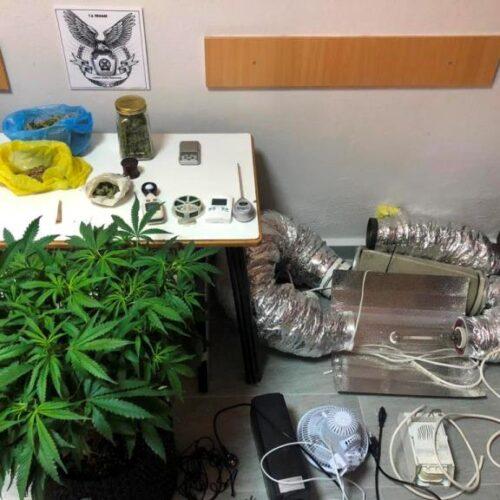 Πέλλα: Συνελήφθη για ναρκωτικά / Καλλιεργούσε ένα δενδρύλλιο κάνναβης