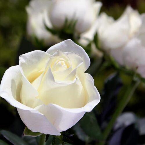 Συλλυπητήριο ΚΕΜΑΕΔ για τον θάνατο του Γιάννη Χασιώτη