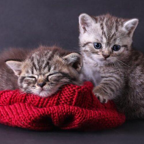 Οι γάτες μου οι... σοσιαλίστριες!