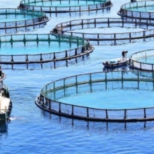 Π.Ε. Ημαθίας: Παραγωγικές Επενδύσεις στην Υδατοκαλλιέργεια / Μεταποίηση προϊόντων αλιείας