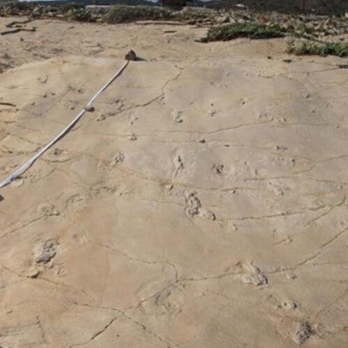 Χανιά: 6,05 εκατ. ετών οι πατημασιές στον Τράχηλο Κισσάμου